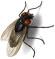 housefly56