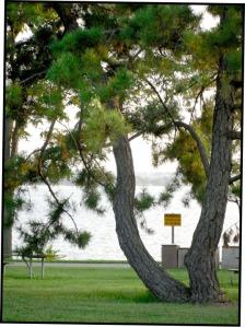 Tree1:blog