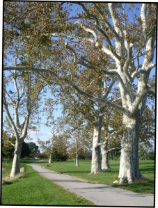 Trees2:blog