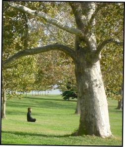 Meditate:blog