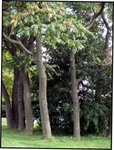 Trees1:blog